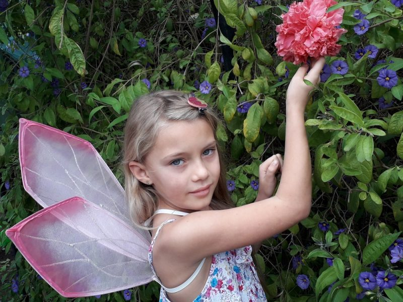 Protea Petal Fairy Wings